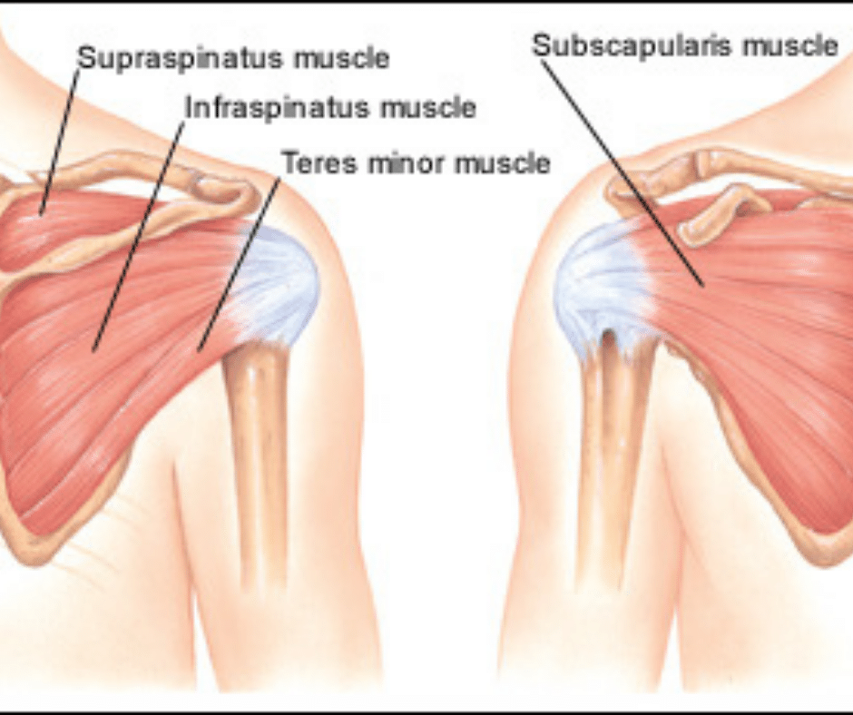 Shoulder Muscles That are Impinged